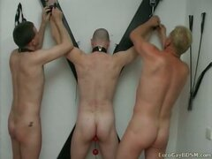 Gay bdsm party with cock...